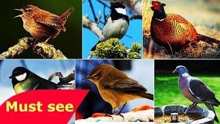 National Geographic Documentary  Bird and Multi Species   Discovery Channel Animals HD 720p