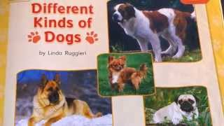 Kindergarten Read Aloud Different Kinds Of Dogs By Linda Ruggieri