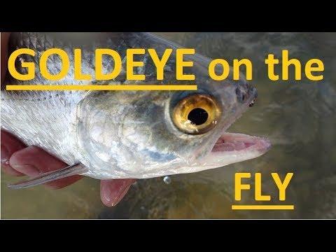 Goldeye On The Fly