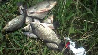 Отчет о рыбалке 05.07.09 в д. Ждановское