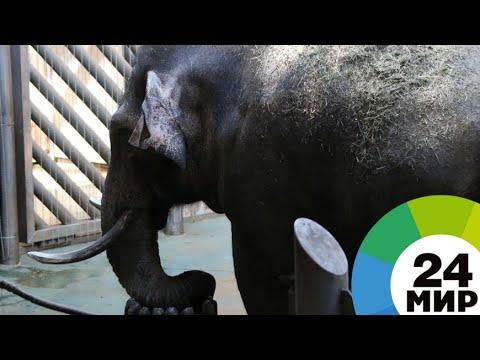 В Австралии животных спасают от жары холодным душем и мороженым - МИР 24