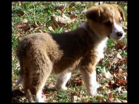 Street Dog Rescue Com