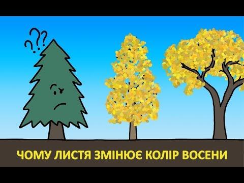 Чому листя змінює