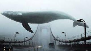 Найтивыход – киты умирают в лужах бензина