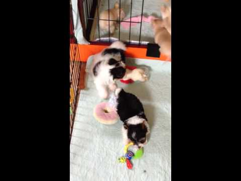 Puppy Play time