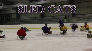 Sled Cats: The most inclusive hockey team on ice