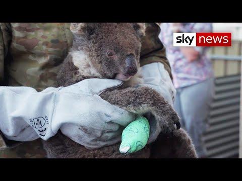 Australia Bushfires: Wildlife