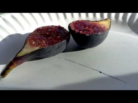 Vista Black Mission Fig Grown in California