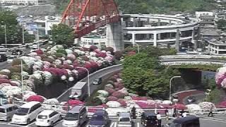 広島県呉市 ゴールデンウィークはツツジが見ごろです。 2011年5月...