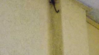 Scorpions  !!!