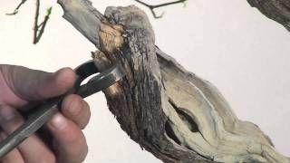 Bonsai Gestaltung eines Flieders (Syringa vulgaris) by Merlin
