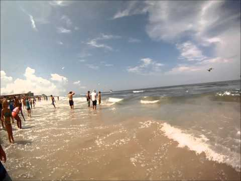 NEW SMYRNA BEACH FEEDING FRENZY - SHARKS
