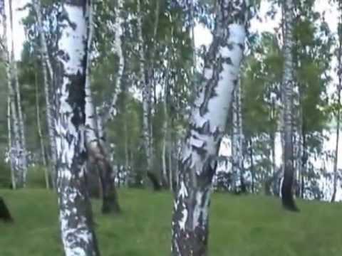 Москва татарская, новости, тамада гармонисты - газета М