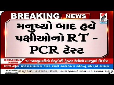 Gujarat : મનુષ્યો બાદ હવે પક્ષીઓનો RT-PCR ટેસ્ટ  || Sandesh News TV