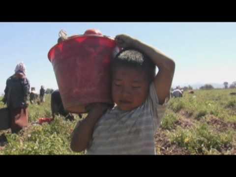 Los Herederos Trailer Pelicula Documental Mexico 2009 Youtube
