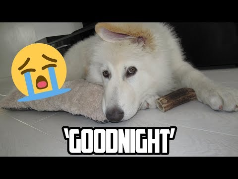 my-dog-cries-when-i-say-the-word-'goodnight'-|-compilation
