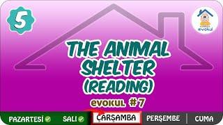 The Animal Shelter (Reading) | 5.Sınıf #uzaktanegitim #evokul Kampı