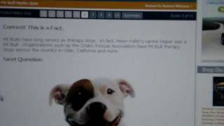 Pit Bull Myth Quiz Interactive