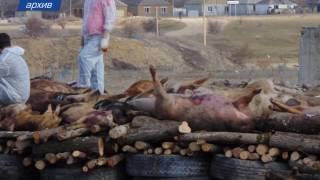 Кладбище домашних животных вывезли из села