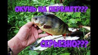 Эта снасть ловить все! Рыбалка на перемет. Щука, окунь. Рыбалка с ночевкой.