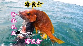 老表升級騷氣新裝,阿鋒海底潛行抓到海黃金,賺到了! 【探海漁人】