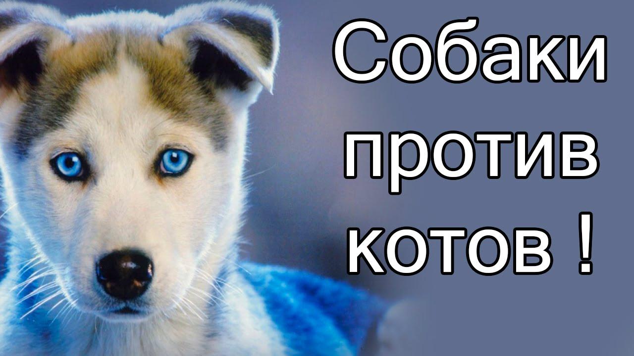 Возвращение котов и собак