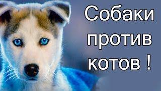 Собаки против котов !