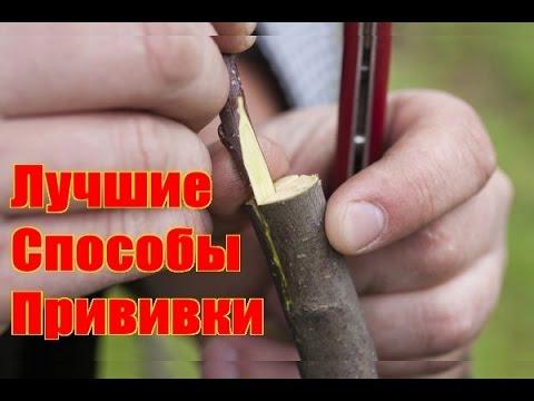 Как прививать деревья