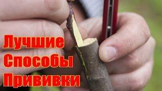 видео Как научиться делать прививки