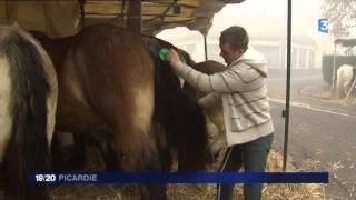 La Foire de la Saint-Clément d'Airaines, rendez-vous des éleveurs de chevaux de trait