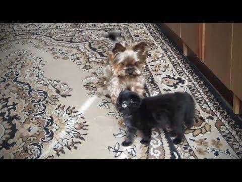 Cute Fuzzy Pets Fluffy Animals