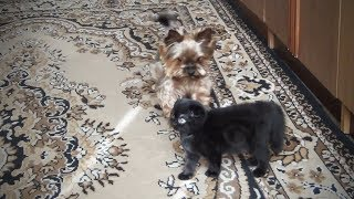 Cute Fuzzy Pets 😍 Fluffy Animals Playing [Funny Pets]