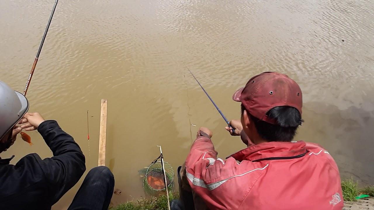 Xem câu cá chép đỏ tại hồ Xuân Hương -Đà Lạt.  Cần câu nhật bãi Dala