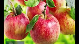 Top 10 Healthy Foods For Kidney Disease And Health naturally