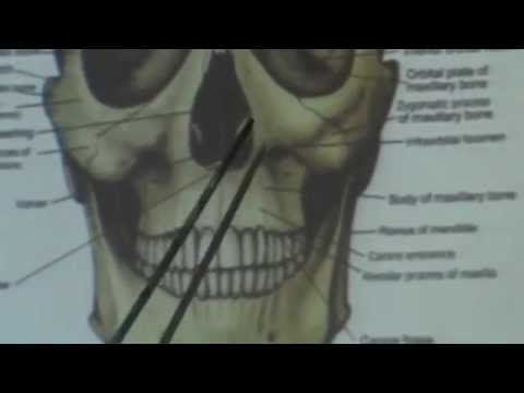 1) Dr.Ahmed Galal 12/10/2014 [ Norma frontalis, Norma verticalis - Norma occipitalis ]