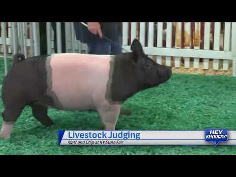 Matt And Chip Learn Livestock Judging
