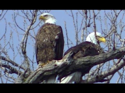 Beautiful Minnesota Land of 10,000 Lakes NATURE watch in HD Full Screen