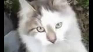 Кошка - Мура