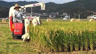 ヤンマーコンバインYANMAREe35稲刈り 久山町福岡県 早期米稲...