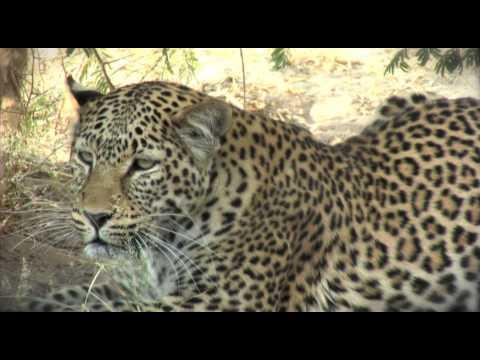 MODISA WILDLIFE PROJECT - BOTSWANA