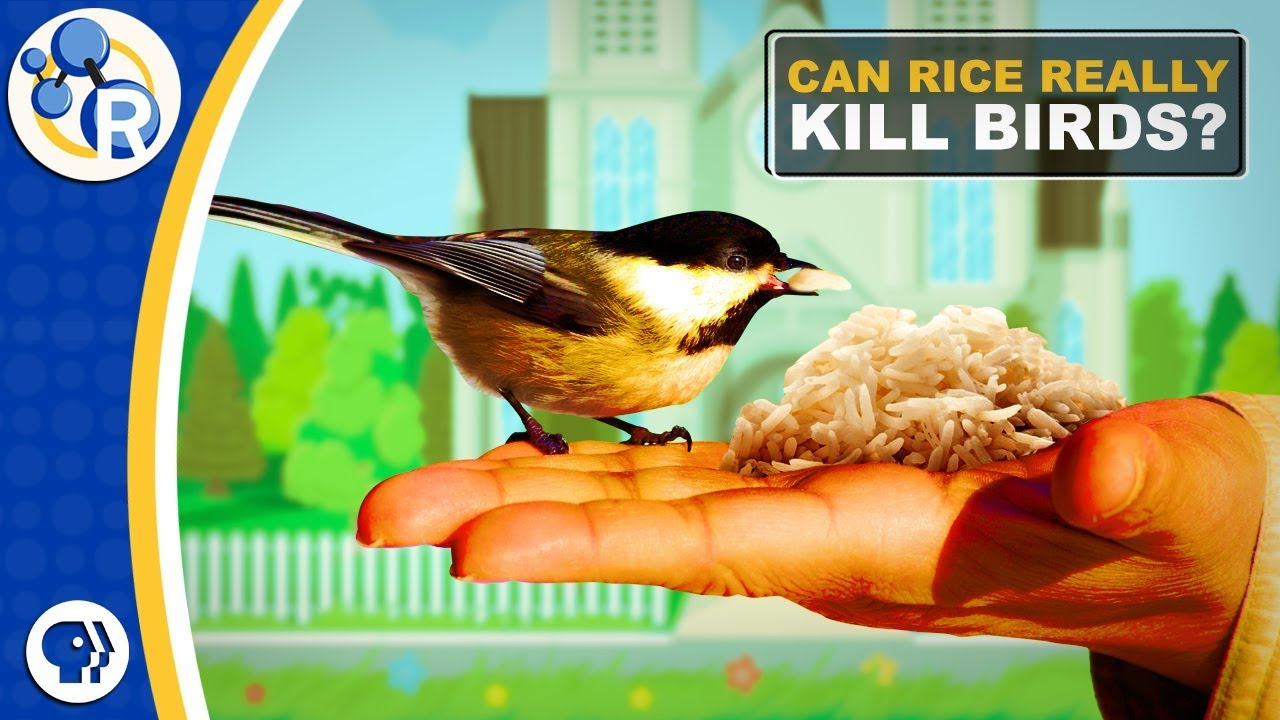 Uncooked Rice Is Bad For Birds