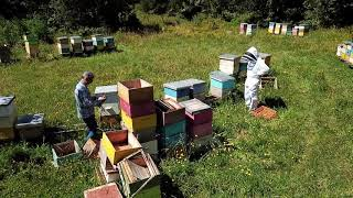 Un poco sobre la apicultura en Chile