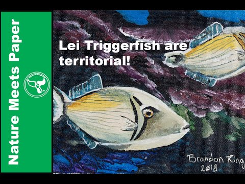 Lei Triggerfish - 4:7 - Nature Meets Paper