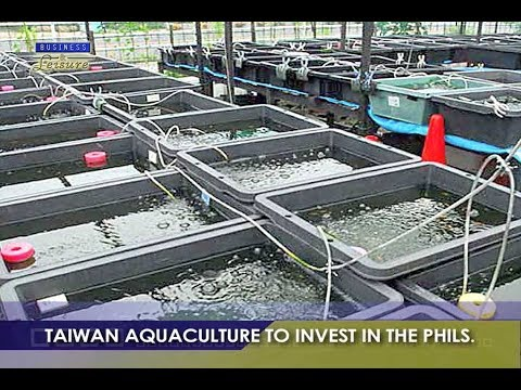 TAIWAN AQUACULTURE TO INVEST IN THE PHILIPPINES   BIZWATCH