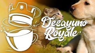 ¡UN ANIMAL NO ES UN JUGUETE! | Desayuno Royale