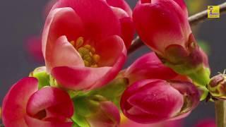 Потрясающие цветущие цветы