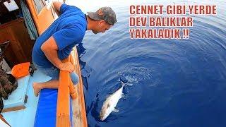 Özlediğimiz Dev Balıkları Bulduk / Aksiyon Dolu Bir Av Günü !!