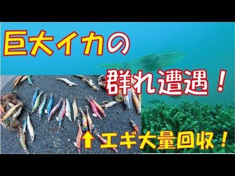 大量のエギを拾ってたら巨大イカの群れ現る!Encountered a flock of squid while picking up trash