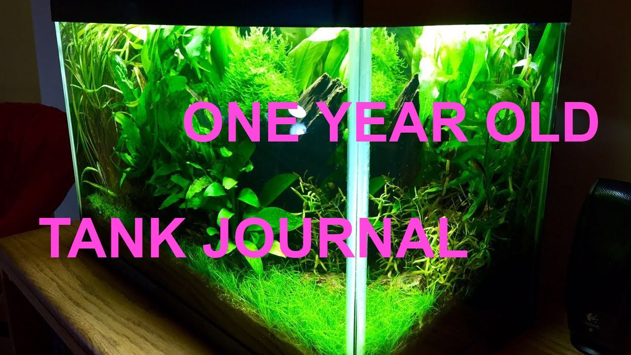 10 Gallon Planted Tank Journal | One Year   YouTube