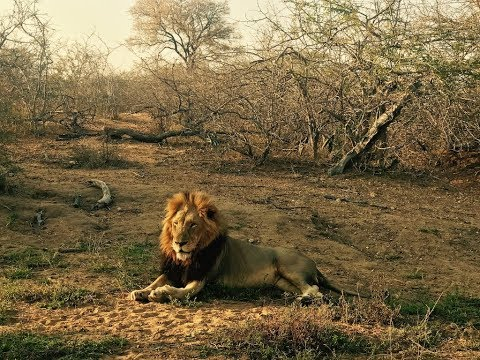 2017 Trip to South Africa in Pictures